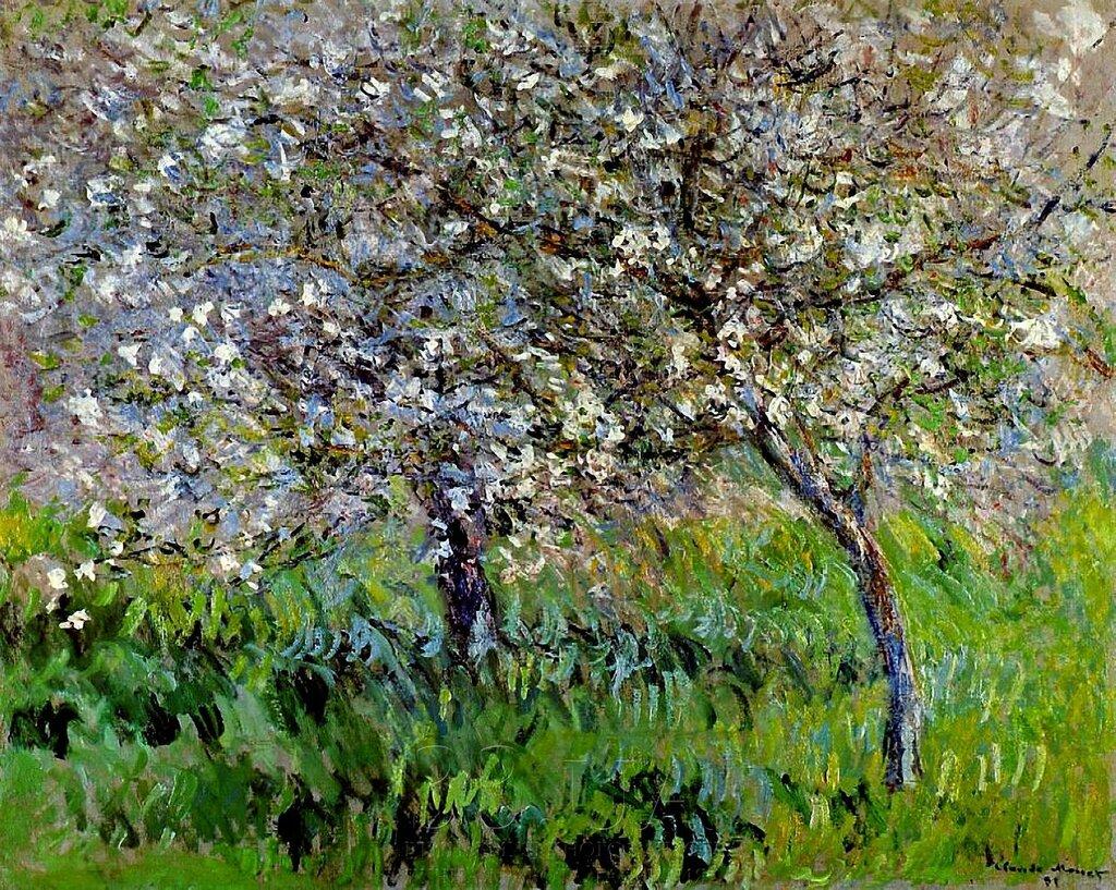 пейзаж < Цветущие яблони в Живерни >:: Клод Моне, описание картины - Claude Monet фото