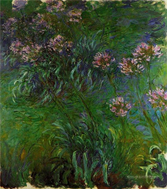 цветы < Агапанатусы >:: Клод Моне, описание картины - Моне Клод (Claude Monet) фото
