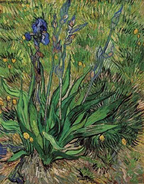 картина Ирис :: Винсент Виллем Ван Гог - Van Gogh фото