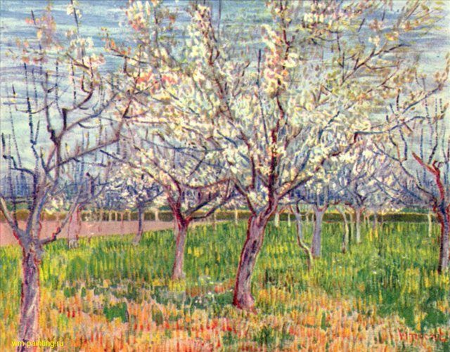 цветущий плодовый сад - Van Gogh (Ван Гог) фото