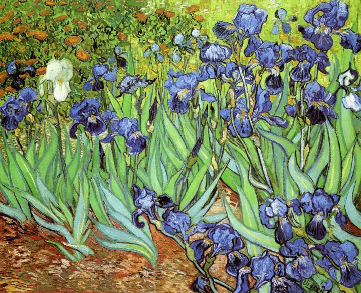картина Ирисы ::  Ван Гог ( Голландия ) - Van Gogh (Ван Гог) фото