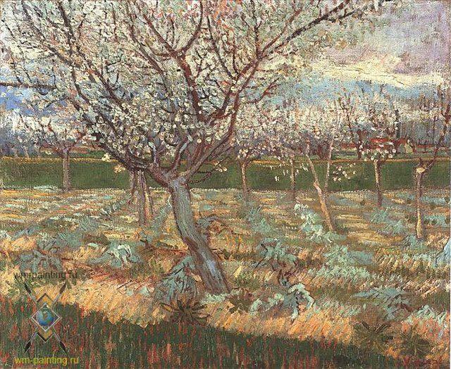 цветущее абрикосовое дерево :: Ван Гог - Van Gogh фото
