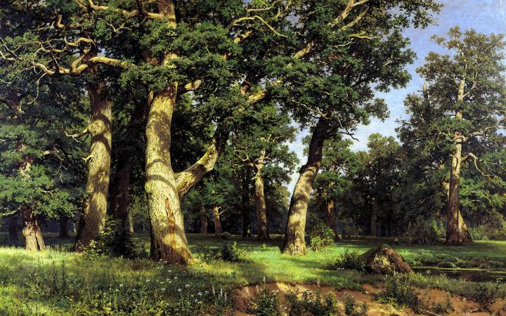 картина-пейзаж Дубовая роща :: Шишкин И.И., описание картины - Ivan Shishkin фото