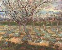 Van Gogh - цветущее абрикосовое дерево
