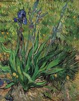Van Gogh - Ирис