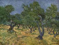 Оливковая роща :: Винсент Виллем Ван Гог