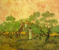 Van Gogh - Сбор оливок  II